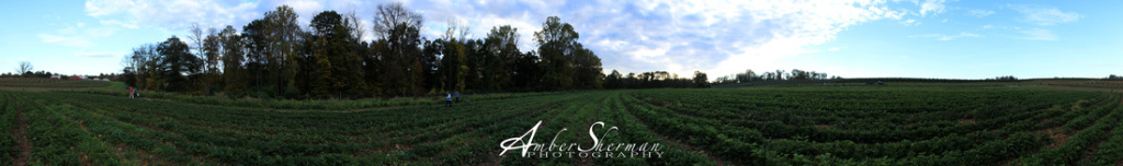 Alstede Farms, NJ